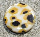 Snäckskalscoin gul leopard 30mm