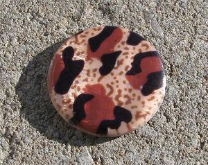 Snäckskalscoin leopard 30mm